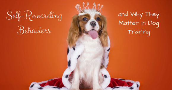 Self-Rewarding Behaviors and Why They Matter in Dog Training