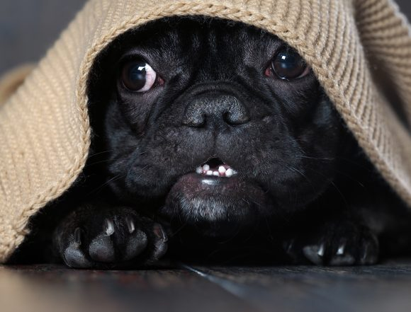 puppy urinary tract infection