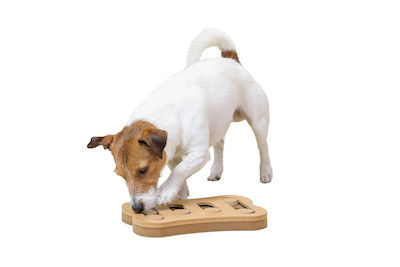 indoor activities to entertain your bored dog, dog training, puppy training