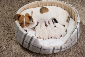 puppy potty training starts with the puppy's mother