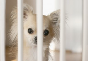 puppy potty training, potty training your puppy the easy way