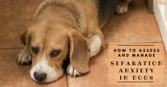 How to Assess and Manage Separation Anxiety in Dogs