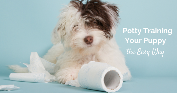 Potty Training a Puppy – It's Easier than You Think!