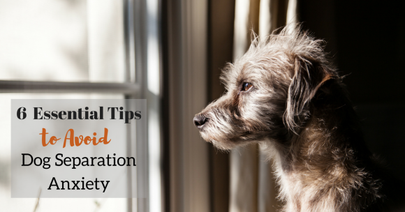 6 Essential Tips to Avoid Dog Separation Anxiety