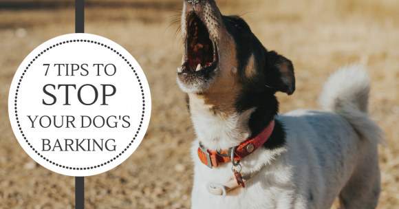 7 Tips to Stop Your Dog's Barking