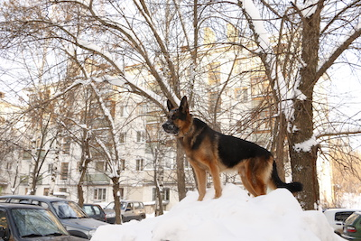 winter dangers for your dog, dog safety in winter