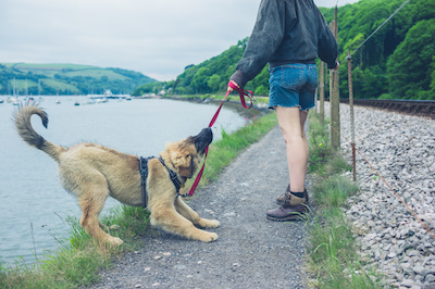 leash manners, leash training