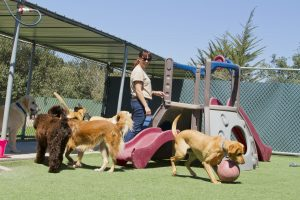 dog anxiety, Dog Fear, separation anxiety in dogs, dog separation anxiety