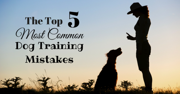 Top 5 Most Common Dog Training Mistakes