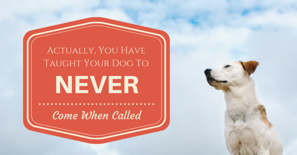 Actually, You Have Taught Your Dog To NEVER Come When Called!