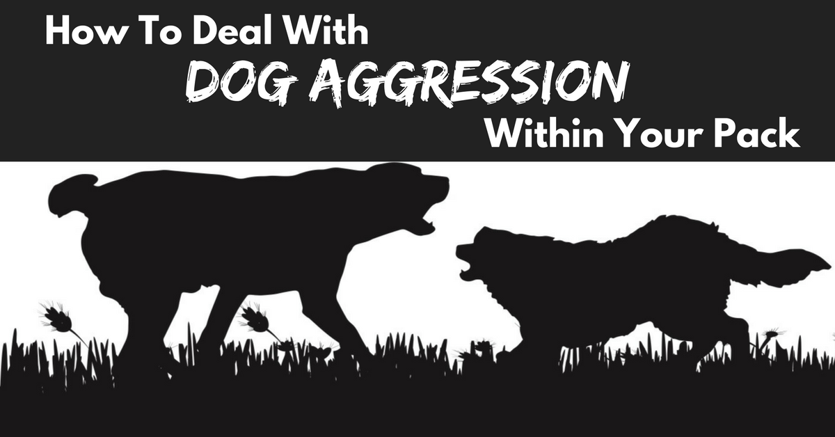 dog aggression, dog aggression in multi-dog home, dog aggression within your pack