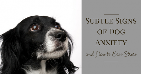 Subtle Signs of Dog Anxiety and How to Ease Stress