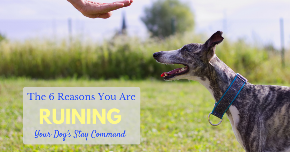 "The 6 Reasons You Are Ruining Your Dog's ""Stay"" Command"