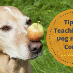 Tips for Teaching Your Dog Impulse Control and Why it Matters