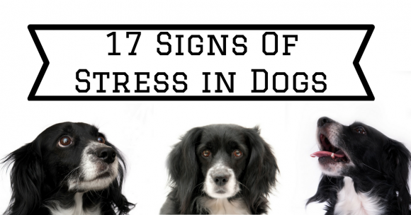 17 Signs Of Stress in Dogs