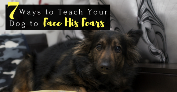 teach dog to face his fears, dog fear, dog anxiety