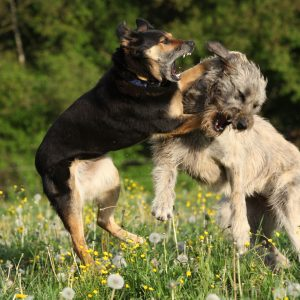 adding dogs to household, dog training, puppy training