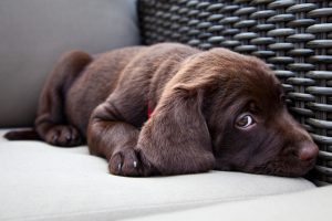 signs of stress in dogs, dog fear, dog anxiety