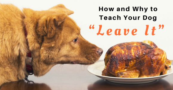 teach your dog leave it, puppy training, dog training