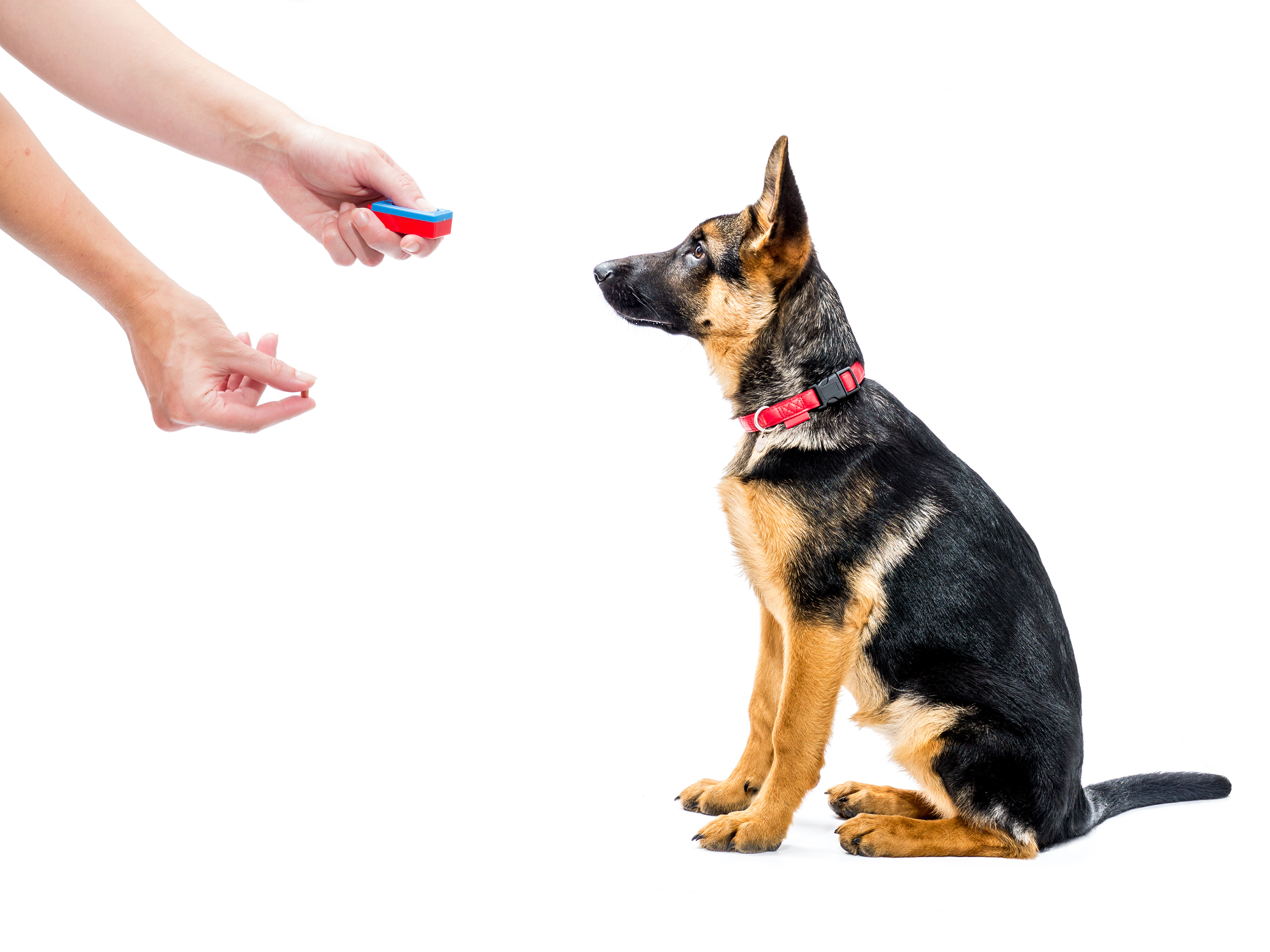 dog training, puppy training, dog manners, getting your dog to leave guests alone