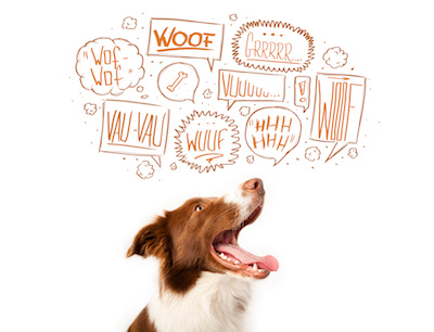 stop dog barking, why do dogs bark, dog training