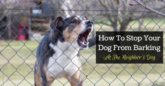 How To Stop Your Dog From Barking At The Neighbor's Dog