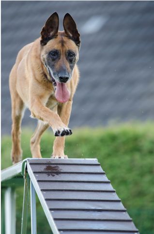 Why Use a Clicker for Dog Training?
