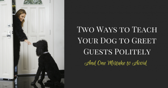 dog training, teach dog to greet guests politely, puppy training, guest manners for dogs