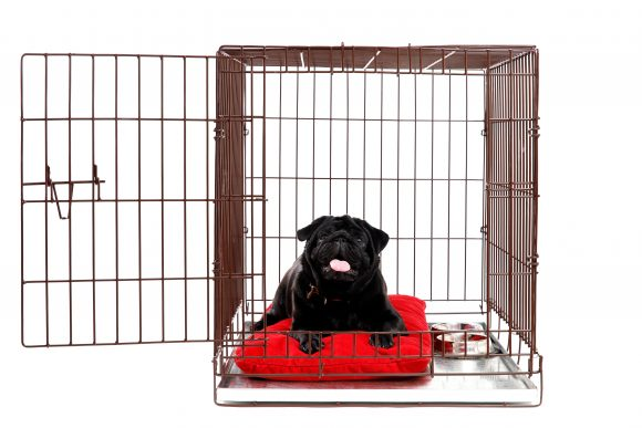 puppy training, puppy potty training, crate training, leash training