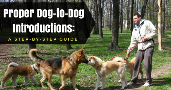 Proper Dog-to-Dog Introductions: a Step-by-Step Guide