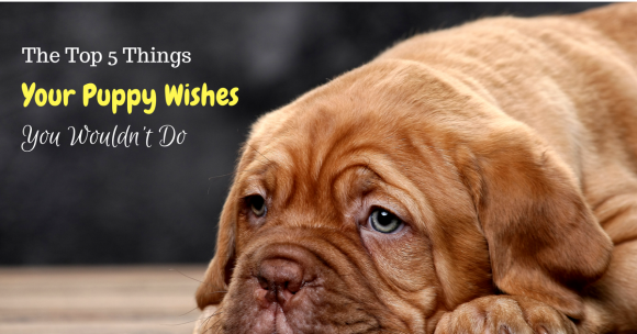 The Top 5 Things Your Puppy Wishes You Wouldn't Do