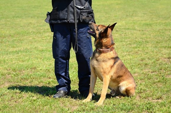 dog prey drive, dog training, controlling dog's prey drive