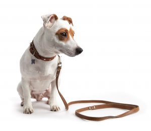 puppy training, dog training, leash training, leash manners, dealing with puppies and dogs that don't like leashes