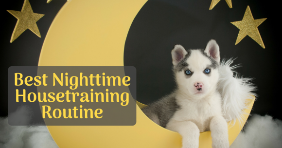 puppy potty training, best nighttime housetraining routine