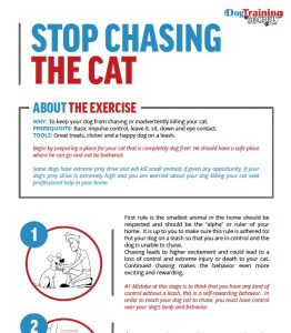 introducing a new cat to your dog, dog training, stop dog from chasing the cat