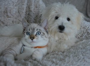 introducing a new cat to your dog, dog training