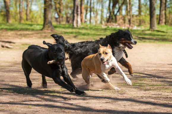 dog training, puppy training, socializing dogs