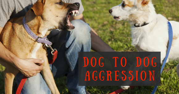 Dog to Dog Aggression