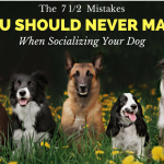 The 7 1/2 Mistakes You Should Never Make When Socializing Your Dog