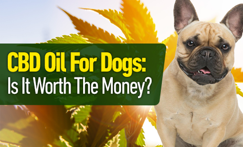 Is CBD Oil for dogs worth the money?