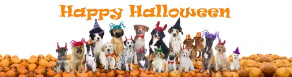 Halloween Dogs, dog halloween costume ideas, dogs and Halloween