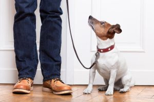 use a leash indoors to help your puppy understand boundaries