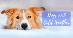 dogs and cold weather, dog house, cold temperatures, bernese mountain dog, body temperature, alaskan malamute, pet, american eskimo dog, great pyrenees, dog warm, fur, degrees fahrenheit, small dogs, cold air