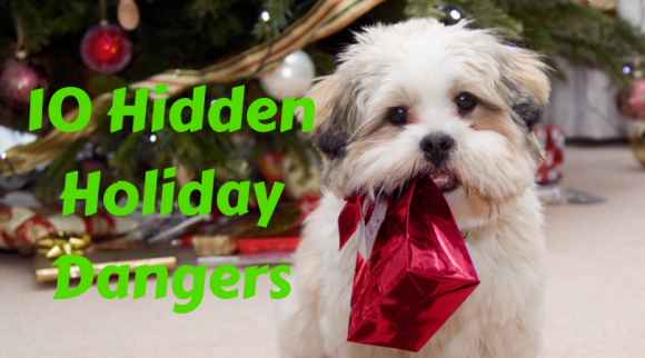 The 10 Hidden Dangers For Dogs Over the Holidays