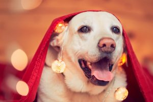 The 10 Hidden Dangers For Dogs Over the Holidays1