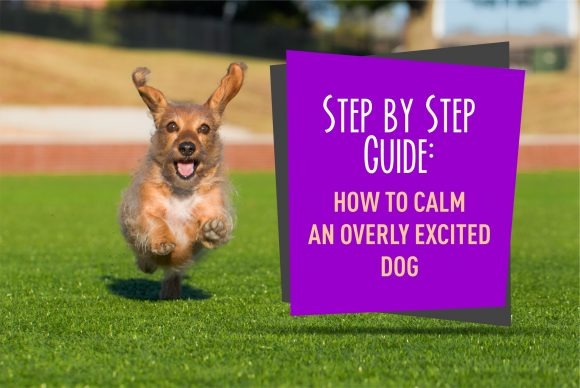 Step by Step Guide on How to Calm an Overly Excited Dog