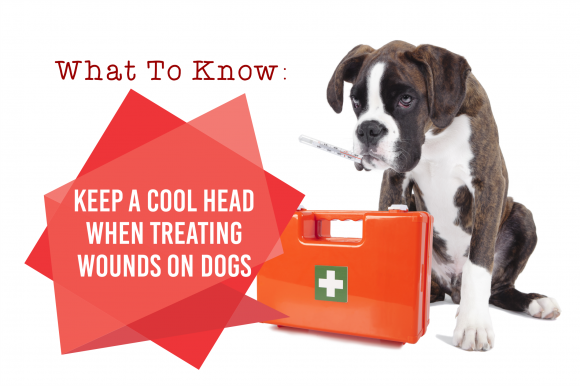 Keep a Cool Head and Know How to Treat Wounds on a Dog