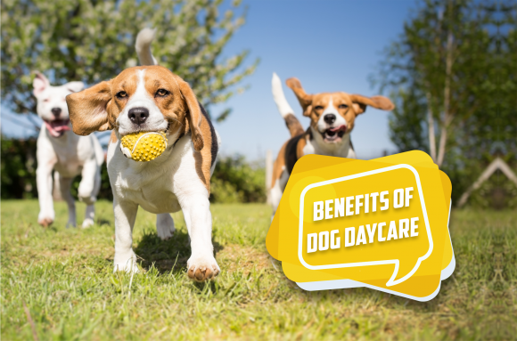 Benefits of Dog Daycare: A Safe Environment for Building Social Skills