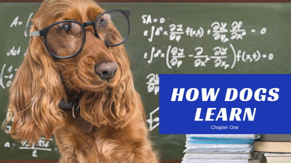 How To Read a Dog's Body Language To Improve Learning