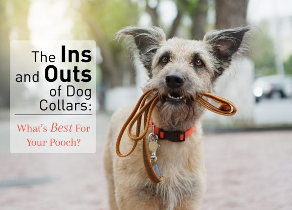 With All the Types of Dog Collars: Which Will Work Best For Your Pooch?
